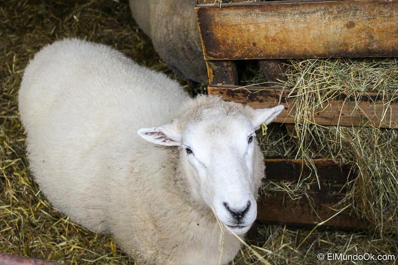 Hackey City Farm Londres-7656