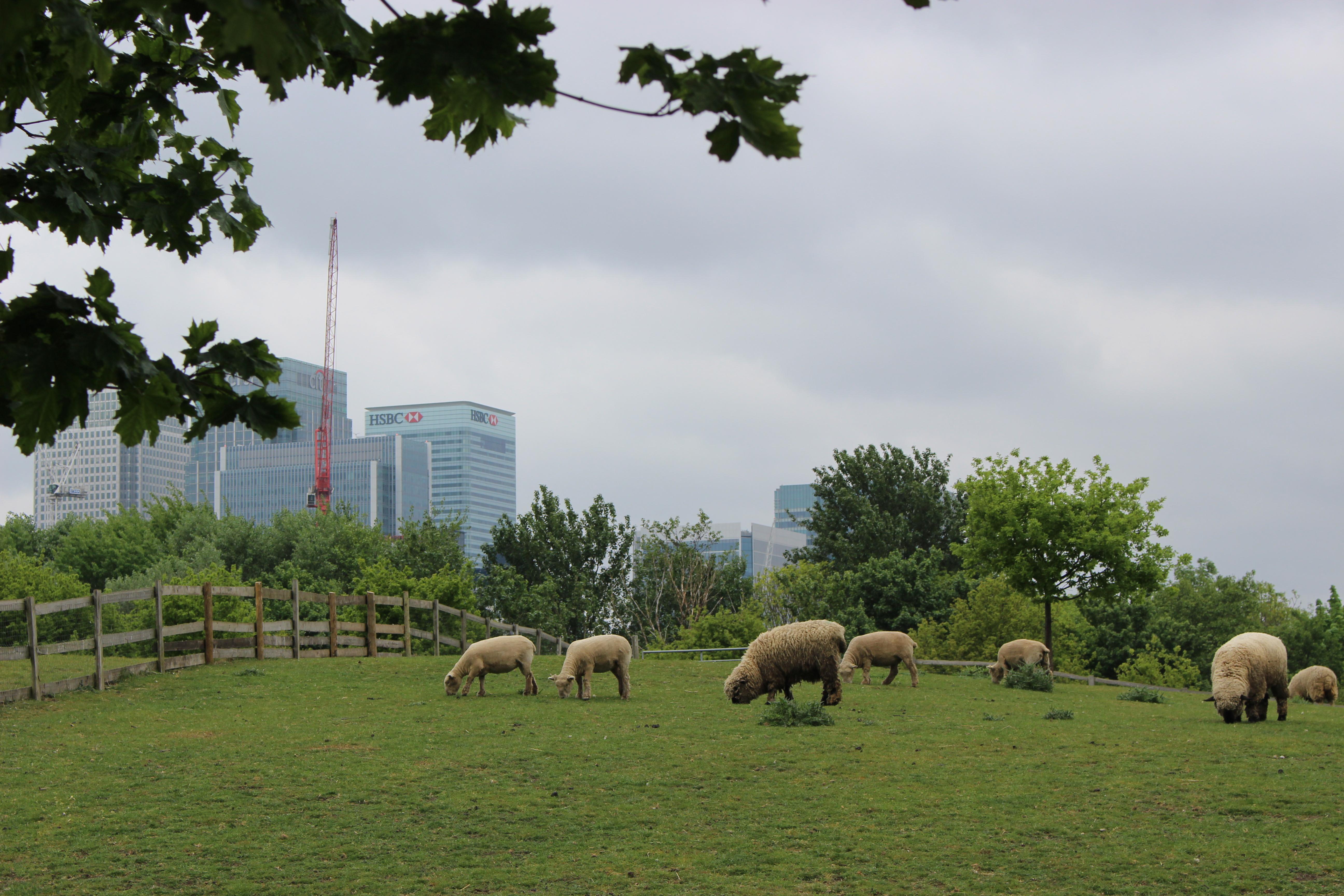 Londres Mudchute Park