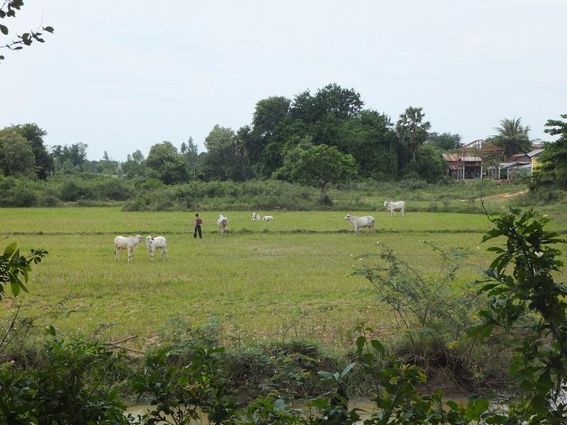 Phnom-Penh- dia 3-24